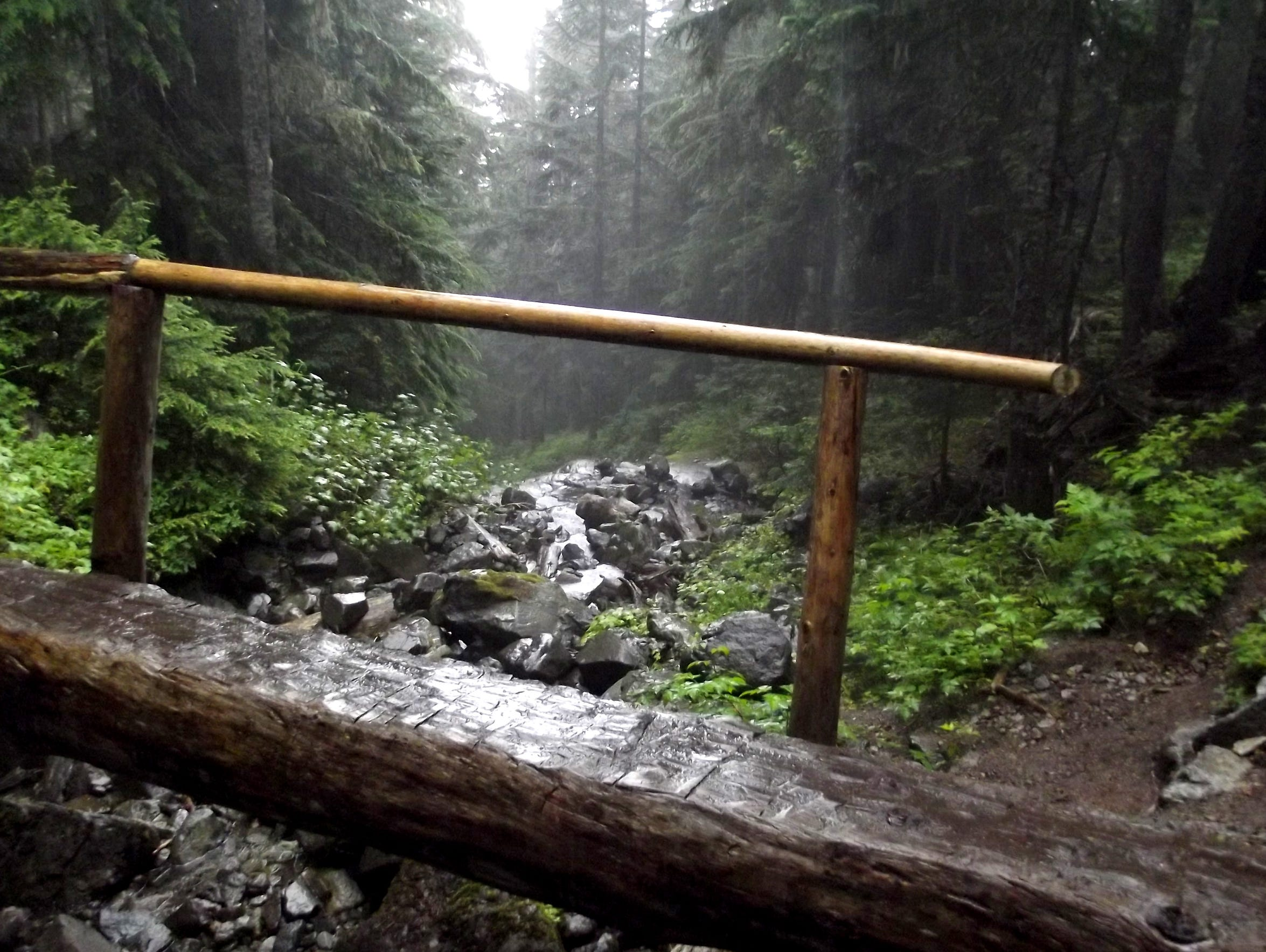 A photo from a trail near the base of Mt. Rainier.