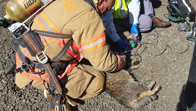 Clackamas firefighters used special resuscitating masks to revive two cats they pulled from a smoke-filled house.