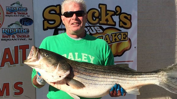 """Dan Daley caught a 42"""" 27 lb., striper on his Riptide Mojo rig. He has had two nice fish, two days in a row."""