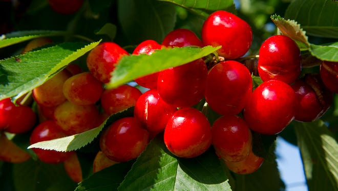 Beef up your red fruit intake and add cherries to your diet.