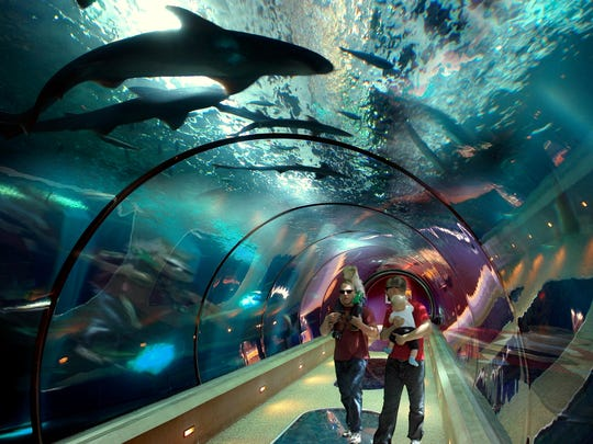 """The Passages of the Deep"" exhibit allows you to walk"