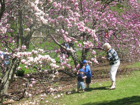 A family scene at the 2014 Lilac Festival. The lilacs were a bit late this year but visitors to Highland Park could still enjoy the Peonies, Magnolias, Irises, Azaleas. Rhododendrums, Tulips, Pansies, etc.