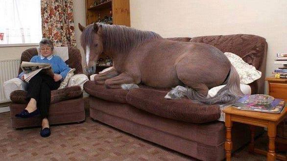rau horse