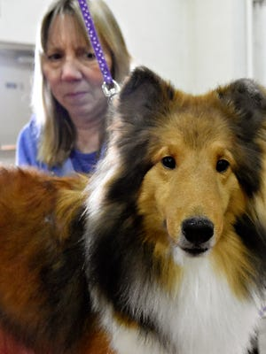 The 2016 Celtic Classic Dog Show at the York Fairgrounds in York City, Wednesday, March 16, 2016. Dawn J. Sagert photo