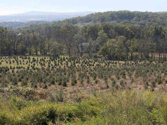 Chrlie-Brown-Christmas-tree-farm.jpg