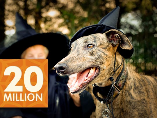 Some 20 million people will dress up their furry friends
