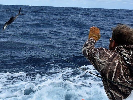 636487733268561733-sailfish-ldb-unb.jpg