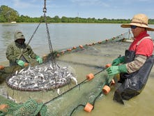 Delta Council Day: Catfish on the plate and on the minds of farmers