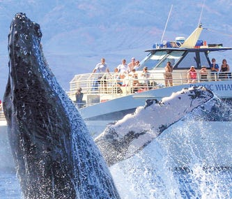 Have a whale of time in Hawaii this winter