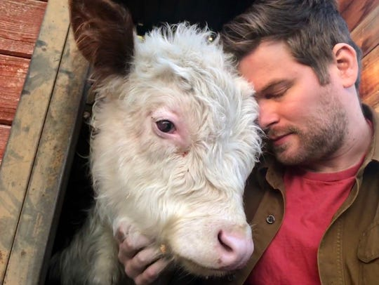 Dan McKernan, 28, of Chelsea, Mich., is still caring for his pet cow Mike.