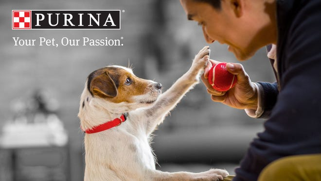 A class-action lawsuit references at least 3,000 online complaints of dogs becoming sick or dying after eating Beneful dog food, which is owned by Purina.