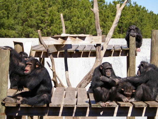 635621894664943942-Chimp-Haven-Discovery-Days