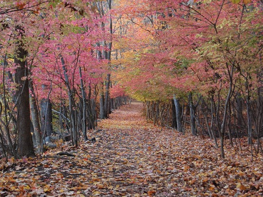 Teatown Lake Reservation's Lakeside Trail is a popular hiking path.