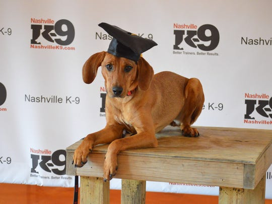 Mia aced her dog obedience training with Nashville