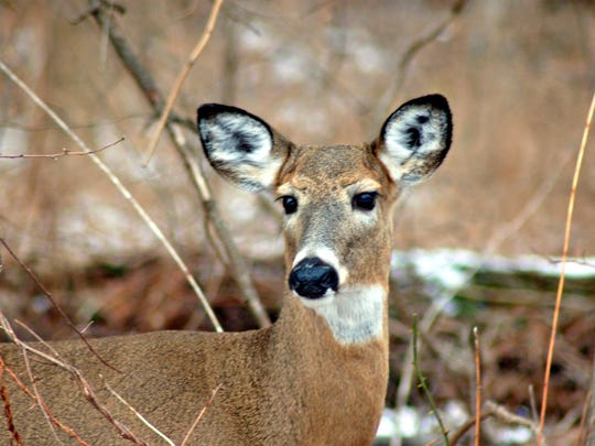 Chronic Wasting Disease strikes again in Pennsylvania, this time in Franklin County.