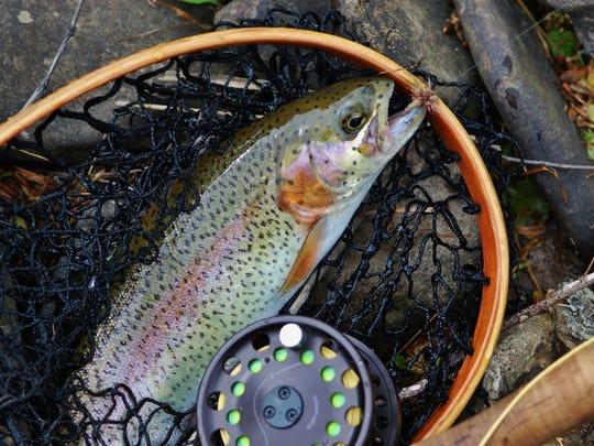 Fish, like this rainbow trout, thrive with proper conservation practices.