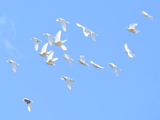 Some pigeons fly in the sky above Charles Morgan's