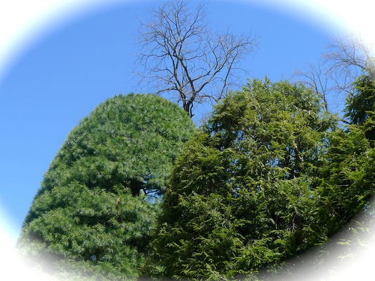 """Karlene Wilson of Springettsbury Township submitted this photo to the YDR Nature and Scenery gallery Apr. 17. Wilson writes, """"Blue Sky."""""""