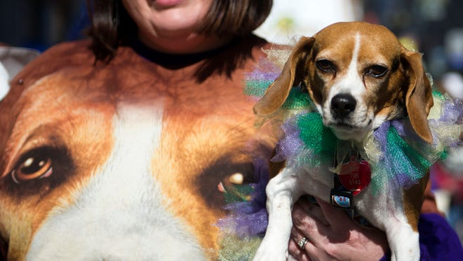 Hannah Smith holds her dog Ruby in the Young-Williams Animal Center's 10th annual Mardi Growl parade on Gay Street on Saturday, March 4, 2017.