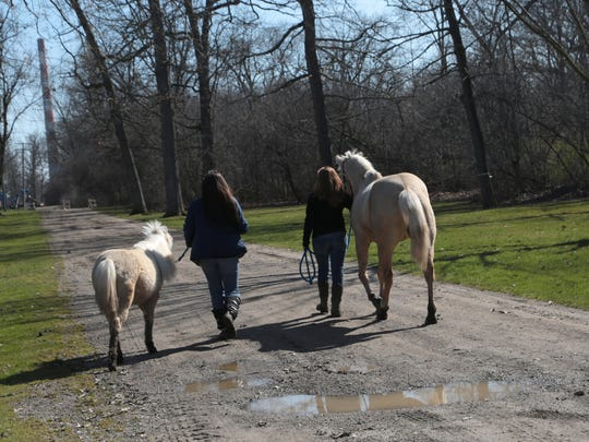 Ponies from the Children's Pony Ranch at Elizabeth Park in Trenton had their tails cut sometime in the early hours on Tuesday, April 12, 2016.