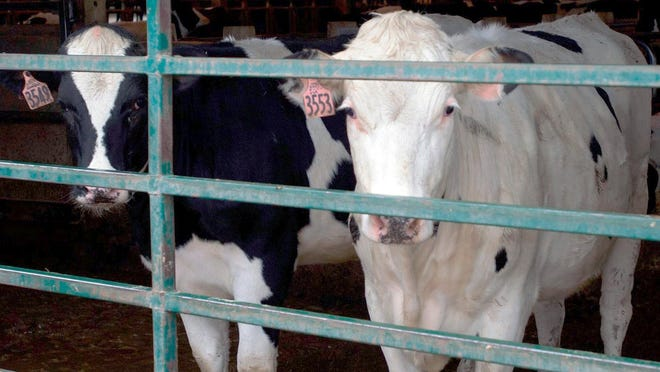 Officials have designated parts of Iosco and Ogemaw counties in Michigan's northern Lower Peninsula as a potential high-risk area for bovine tuberculosis.