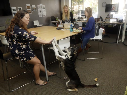 Bowie, a 2-year-old husky mix, gives a high-five to employee Rosie Brown, left, at Sterling Communications in Los Gatos, Calif. Many small business owners believe pets improve the quality of work life.