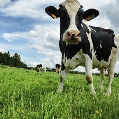 Hearing set for Door County CAFO expansion