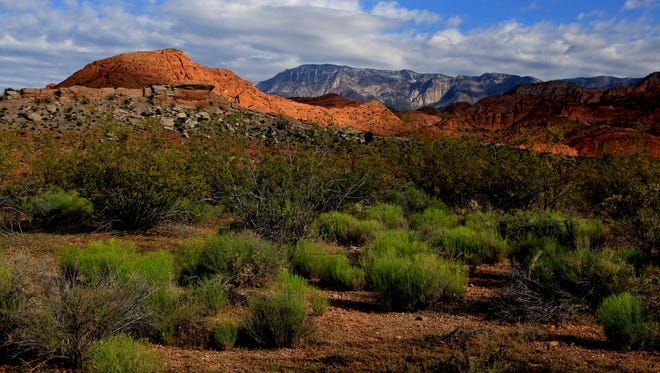 A green foreground contrasts with the White Reef, the Red Reef and the blue-gray of Pine Valley Mountain as seen from the Leeds Reef Trail in the Red Cliffs Recreation Area.
