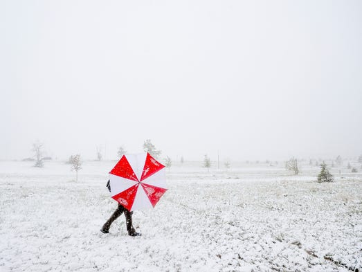 Pat Blazek shields himself from the snow and wind with an umbrella as he competes in a disc golf tournament Sunday, May 11, 2014, at Aggie Greens in Fort Collins, CO. Snow is expected to fall through Monday, with highs reaching the sixties later this week.