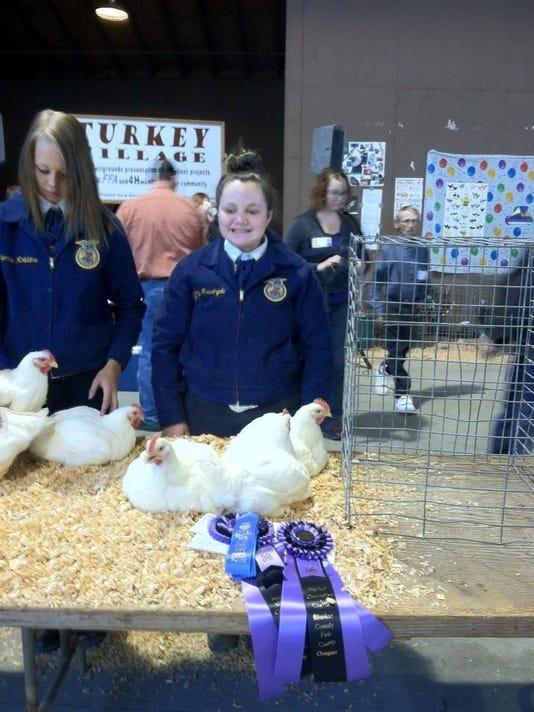 Aumsville Chickens