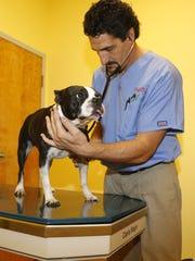 Steven Cudia, owner of PriorityVet, a veterinarian