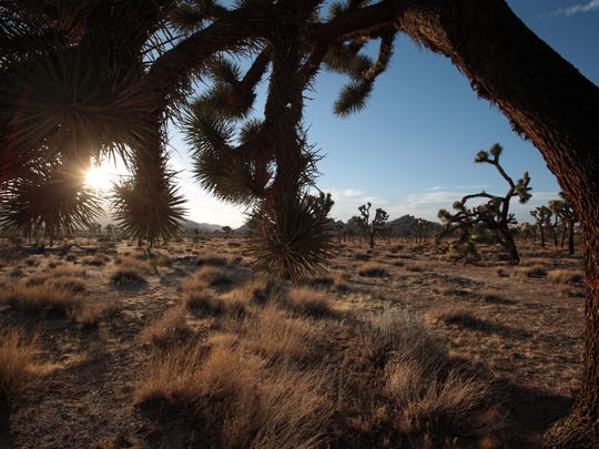 The sun sets in Joshua Tree National Park on May 29, 2014.