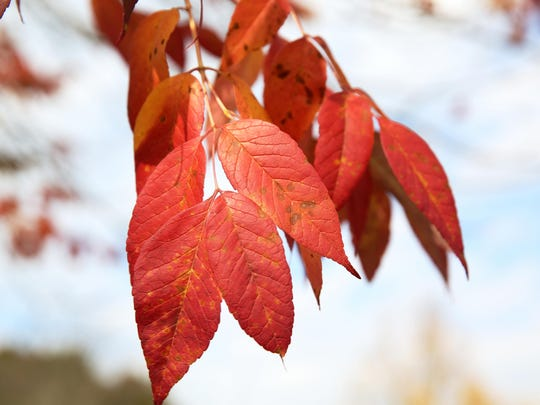 fall.colors2
