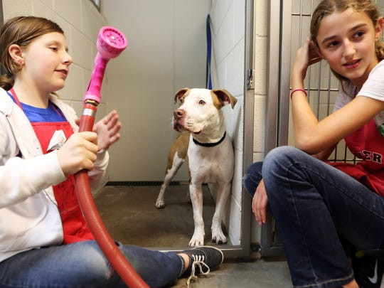 Caitlin Read, left, and Kennedy O'Day prepare to give Scooter a bath during a past summer camp at the Willamette Humane Society.