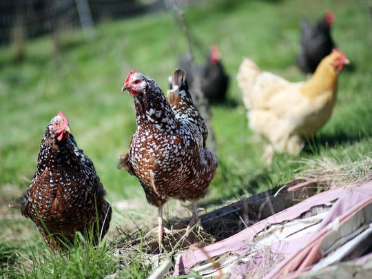 Oregon Winter Poultry & Homesteading Faire, Feb. 13
