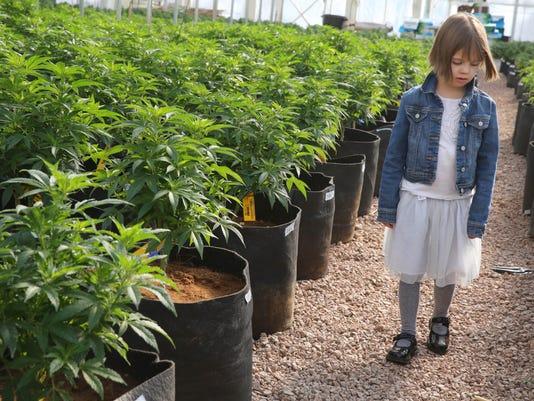 Marijuana Caregiver C_Atki.jpg