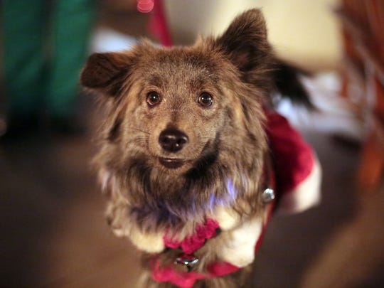 A dog in a Santa costume competes in the Christmas costume contest during this month's Yappy Hour.