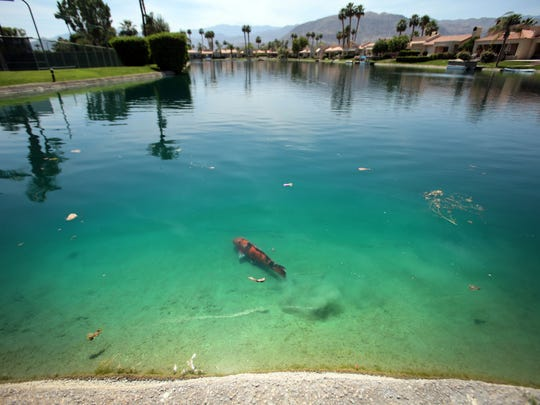 A fish swims Thursday in Lake Mirage, a non-golf community of 238 homes that features a series of man-made lakes in Rancho Mirage.