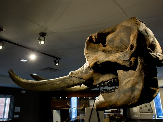 The skull of a mammoth is on display at the Nasr Natural Science Museum in the Clara E. Mackenzie building on the campus of St. Clair County Community College in Port Huron.