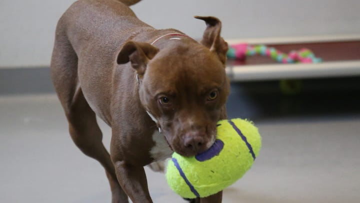 What to do before adopting an animal: Adoptable Animal of the Week