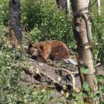 Oxbow Nature Study Area trail cam photos
