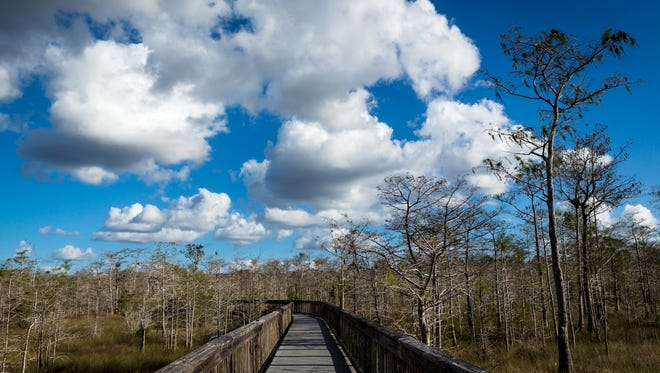 In this file photo, a boardwalk heads into cypress trees at the Kirby Storter Roadside Park in the Big Cypress National Preserve on Wednesday, Dec. 3, 2014, in rural Collier County.
