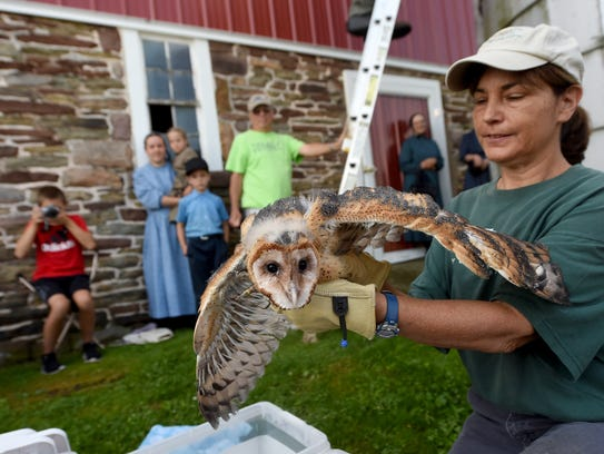 Susan Klugman holds out a barn owl for visitors to