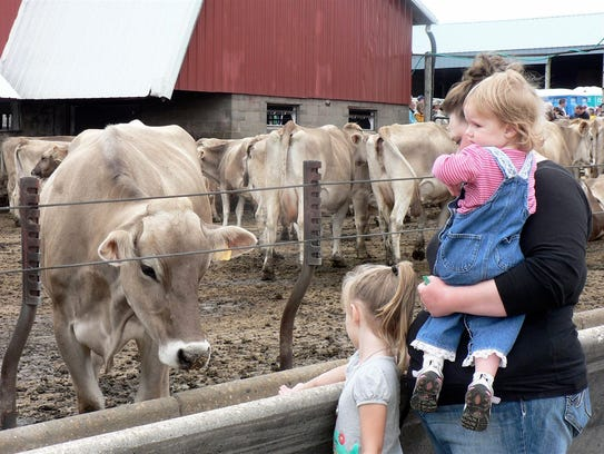 An upclose meeting with a cow at a dairy breakfast.