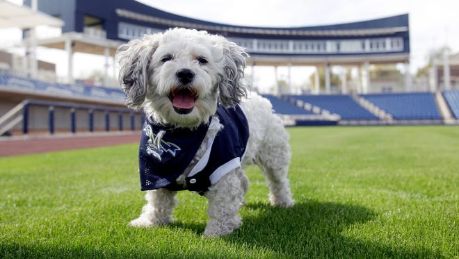 Hank the dog, the Milwaukee Brewers' mascot.