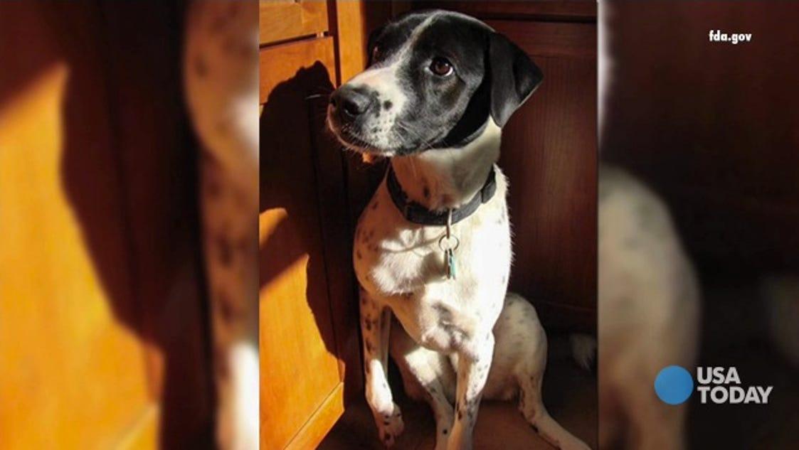 Deadly Dog Treats Facebook