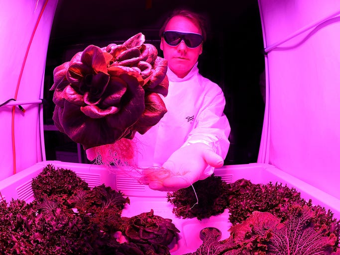 Daniel Schubert, an engineer, holds a head of lettuce at the German Aerospace Center on July 21 in Bremen, Germany. Scientists and engineers are developing greenhouses for possible colonies on the moon and Mars.
