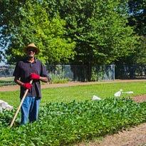 Urban farm brings fresh produce, peace to Memphis veterans