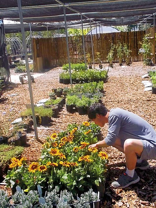Caiden Carter looks over some of the plants at Ziascapes Nursery and Landscape, 1110 NM-48, Alto.