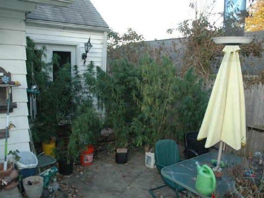 635508238796980120-Weed-jungle